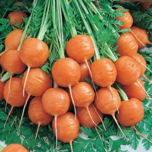 Carrot Paris Market -50biji