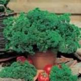 parsley aphrodite-20 biji
