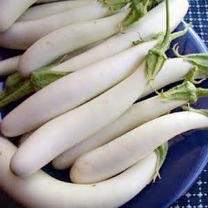 Biji terong putih -20 biji