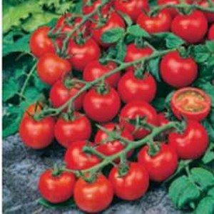 Tomato Red Cherry – 5biji