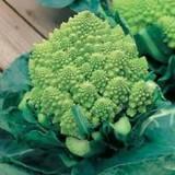 Cauliflower Romanesco Natalino – 20biji