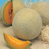 Honeyrock Melon Sweet -5biji