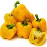Paprika Kuning Polaris – 5biji