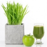 Wheatgrass -100biji