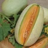 Melon Melba -3biji