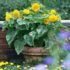 Sunflower Teddy Bear – 5biji