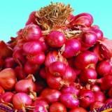 Bawang Merah Tuk Tuk – 100biji