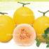 Melon Golden Luna-3biji