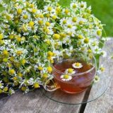 German Chamomile – 50biji