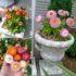 Helicryssum Tom Thomb Mixed -30biji