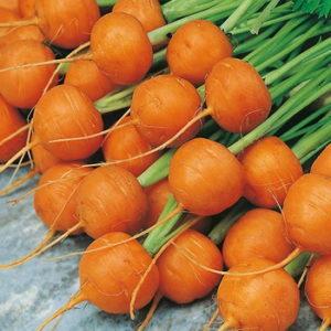 Carrot Paris – 50 biji