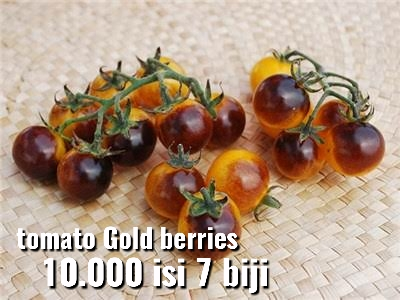 Tomat Goldberries